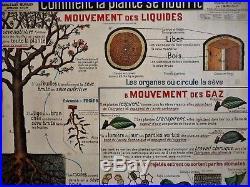 Affiche scolaire tableau Armand Colin Botanique Plante type carte Vidal Lablache