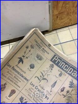 Ancienne Carte Scolaire Colin Plantes Utiles Botanique École