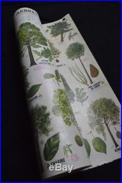 Ancienne affiche arbres botanique fleurs scolaire école carte MDI Rossignol