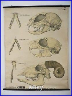 Ancienne affiche scolaire Bonnier Cranes Histoire Naturelle vers1900 Deyrolle