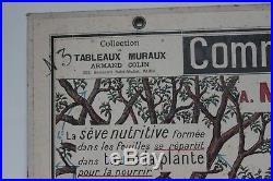 Ancienne grande affiche scolaire Botanique Armand Colin école carte plante