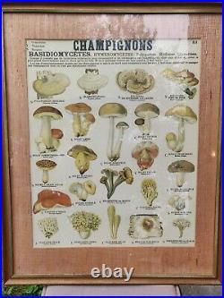 DEYROLLE affiche Les Champignons N° 53 Richier Laugier Paris vers 1960
