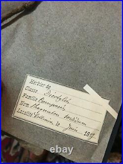 Grand Herbier ancien 100 planches de 1889 à 1891 dicotylée monocotylée acotylée