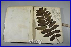 Herbier 1930 31 planches avec courrier