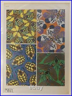 Seguy Série des insectes Planche 20 1929