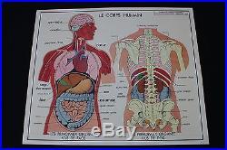 V226 Affiche scolaire papier Rossignol 1 Corps humain 2 Appareil digestif 9075