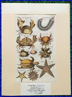 XVII ème Jonston & Merian Superbe Gravure Crabes Tortue Etoiles Pl VIII 1657